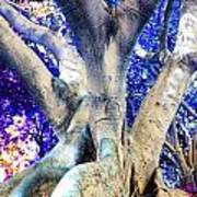 Tree Of Life Photography On Canvas Poster Beautiful Unique Fine Art Prints For Your Home Decoration Art Print