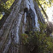 Tree Of Mystery #1 Art Print