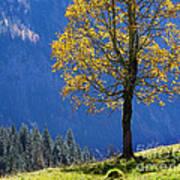 Tree Of Seasons Art Print