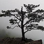 Tree On The Blue Ridge Parkway Art Print