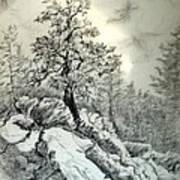 Tree On The Rocks Art Print