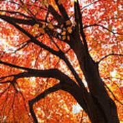 Tree Orange Blast Art Print