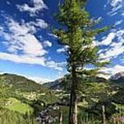 tree over Cordevole valley Art Print