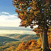Tree Overlook Vista Landscape Art Print