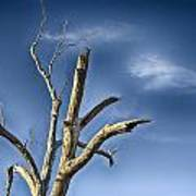 Tree Pointer Art Print