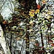 Tree Reflected In Leaves Art Print