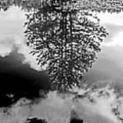 Tree Reflected  Art Print