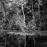 Tree Reflection In Chesapeake And Ohio Canal Art Print