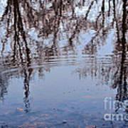 Tree Reflections I Art Print