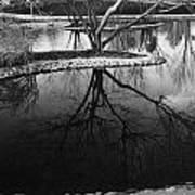 Tree Reflections On The Pond Art Print