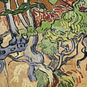Tree Roots Art Print by Vincent Van Gogh