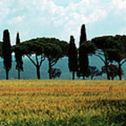 Tree Row In Tuscany Print by Heiko Koehrer-Wagner