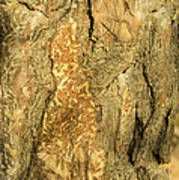 Tree Self Reflections In Bark Art Print