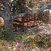 Tree Series 46 Art Print