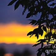 Tree Silhouette Over Sunset Art Print