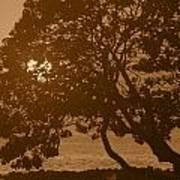 Tree Silhouettes Art Print