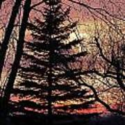 Tree Sunset Art Print