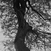 Tree Tangle Art Print