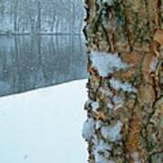 Tree Trunk Bark And River In Snowfall Art Print