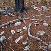 Tree Trunk Roots And Rocks Art Print