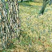 Tree Trunks In Grass Art Print