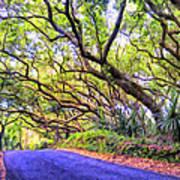 Tree Tunnel On The Big Island Art Print
