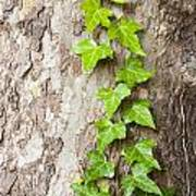 Tree Vine Art Print