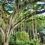 Tree-waimea Arboretum Art Print