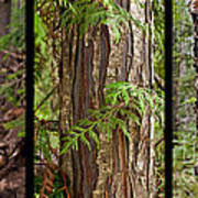 Tree Wear By Nature Art Print