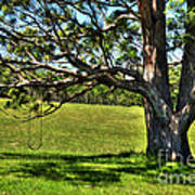 Tree With A Swing Art Print