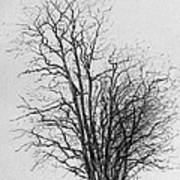 Tree With Figures Art Print