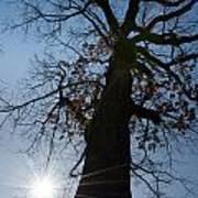 Tree With Sun Art Print