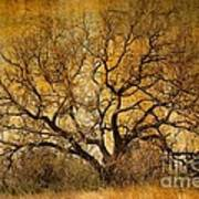 Tree Without Shade Art Print