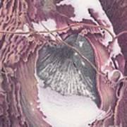 Treeheart Art Print by Elizabeth Dobbs