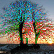Trees Aglow Art Print