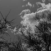 Trees And Clouds 3 Bw Art Print
