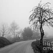 Trees And Fog Art Print