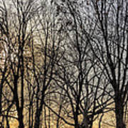 Trees And Late Afternoon Light Art Print