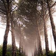 Trees And Mist Art Print