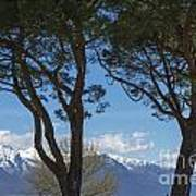 Trees And Snow-capped Mountain Art Print