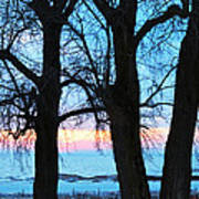 Trees And Sunset Art Print