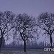 Trees At Night Art Print