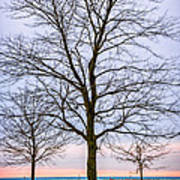 Trees At The Boardwalk In Toronto Art Print by Elena Elisseeva
