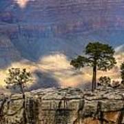 Trees At The Grand Canyon Art Print