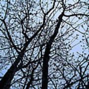 Trees From Below Art Print