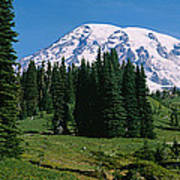 Trees In A Forest, Mt Rainier National Art Print
