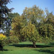Trees In Autumn Art Print