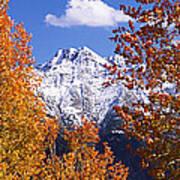 Trees In Autumn, Colorado, Usa Art Print