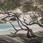 Trees In Costa Rica Art Print