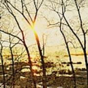 Trees In Marsh, Maine, Usa Art Print